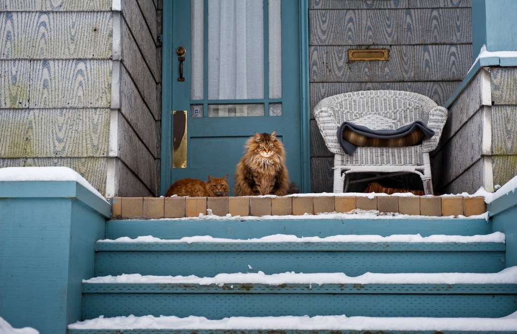 standoffish cats waiting to be let back inside