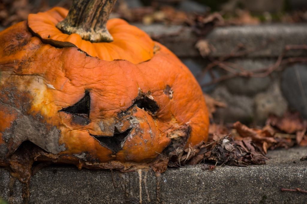 December 2017 - Disgusting Rotted Pumpkins-62-2