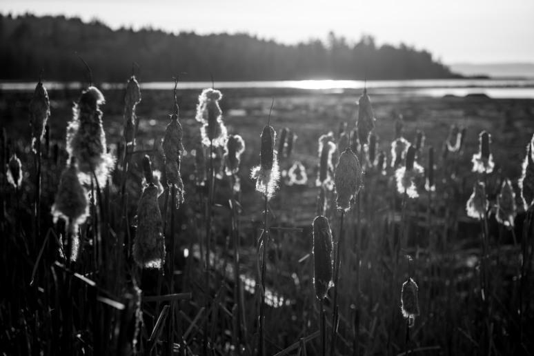 january-2017-theler-wetland-53